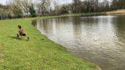 Beckenham Place Park Lake 2